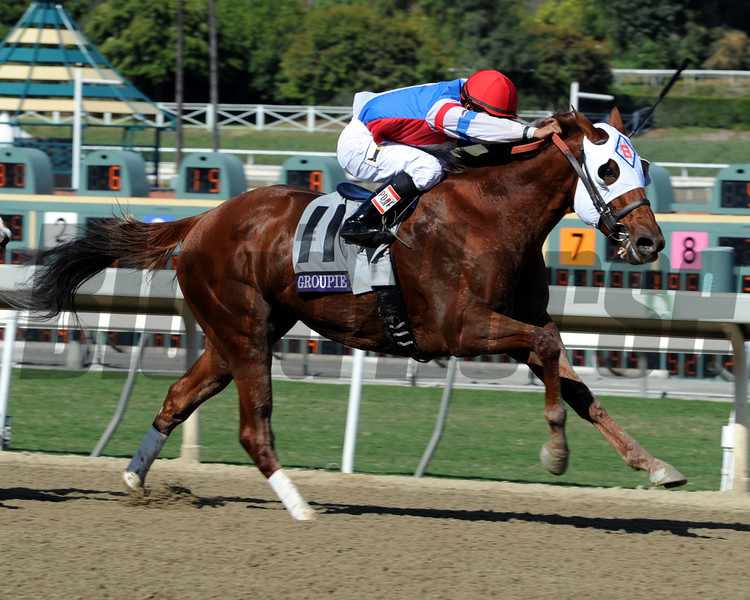 Groupie Doll wins the 2013 Breeders' Cup Filly and Mare Sprint.<br /> Photo by Dave Harmon