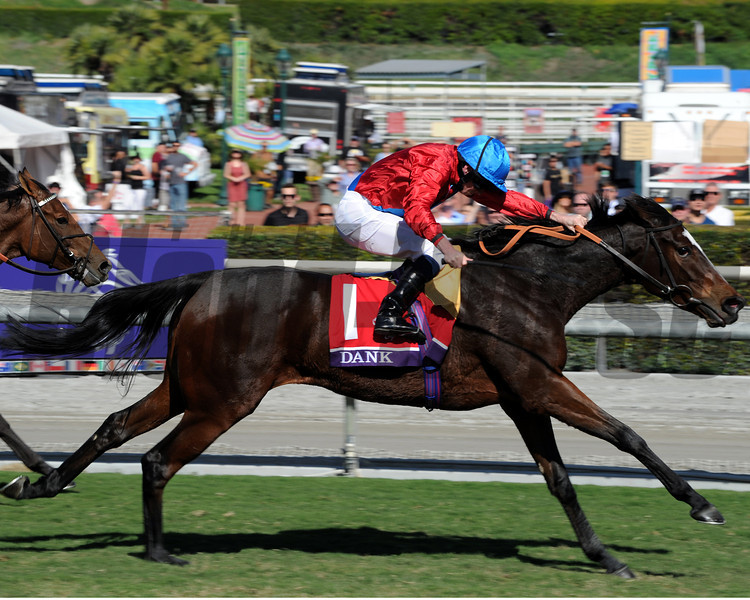 Dank wins the Breeders' Cup Filly and Mare Turf. 11/2/2013<br /> Photo by Dave Harmon