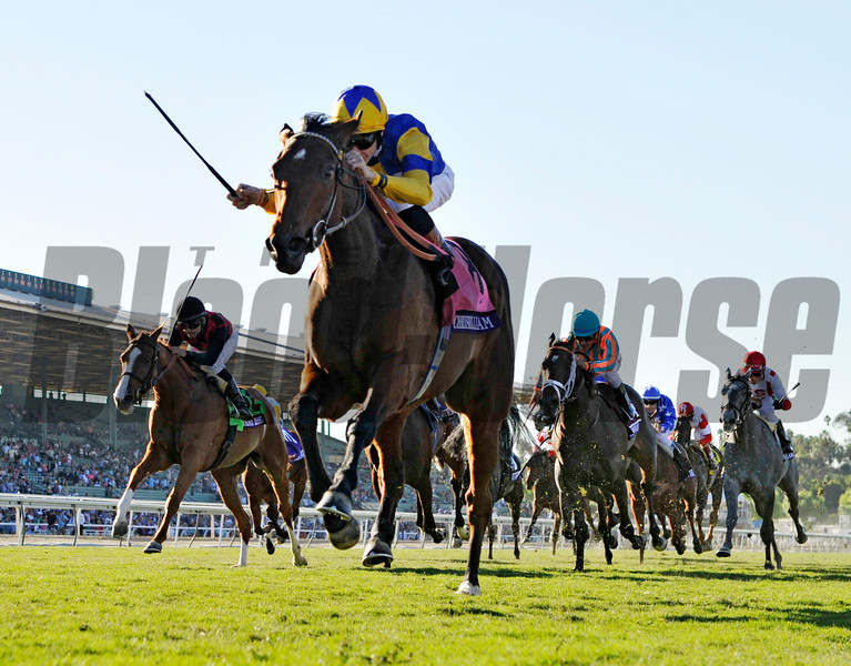 Chriselliam wins the 2013 Breeders' Cup Juvenile Fillies Turf.<br /> Skip Dickstein Photo