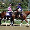 She's a Tiger Breeders' Cup 2013 Post Parade<br /> Dave Harmon Photo