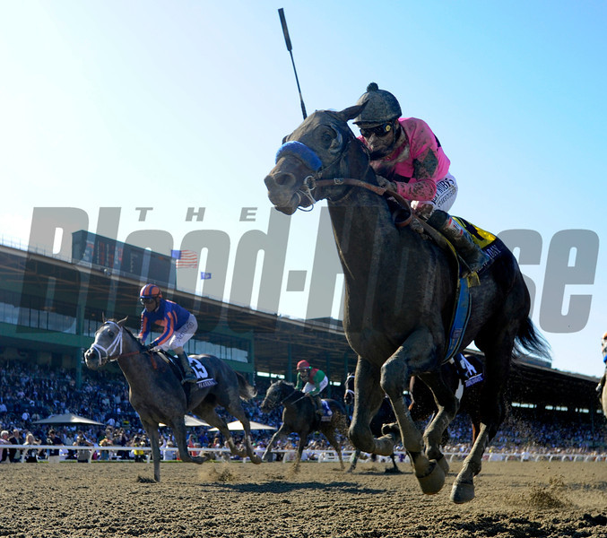 New Years Day wins the Juvenile at Santa Anita Park in Arcadia, CA.  November 1, 2013.  Photo by Skip Dickstein
