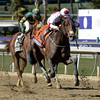 London Bridge with jockey Mike Smith rallys to win the Breeders' Cup Marathon at Santa Anita in Arcadia California Nov. 1, 2013.  Photo by Skip Dickstein