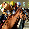 Wise Dan wins the Breeders Cup Mile at Santa Anita. Photo by Wally Skalij
