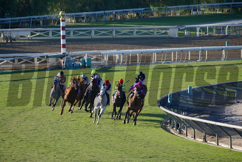 The field rounded the turn in the Breeders' Cup Mile (G. I). Wise Dan, with Jose Lezcano up (yellow cap) came from behind to win the race. Photo by Crawford Ifland.