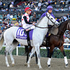 Za Approval in the post parade for the 2013 Breeders' Cup Mile.<br /> Dave Harmon Photo