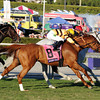 Wise Dan wins the 2013 Breeders' Cup Mile.<br /> Dave Harmon Photo