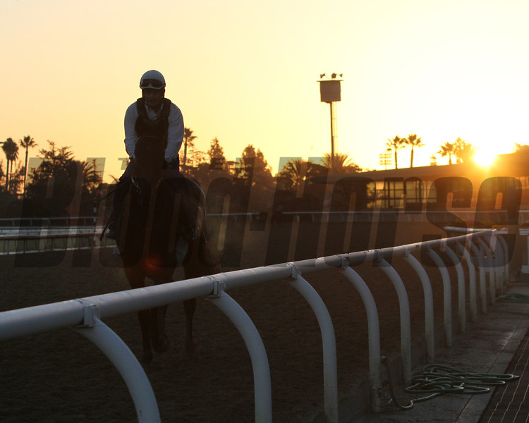 Sunrise at Santa Anita Park Breeders' Cup Chad B. Harmon