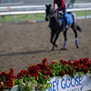 Caption:  sponsorship signage with Grey Goose<br /> Breeders' Cup horses and connections at Santa Anita near Acadia, California, preparing for Breeders' Cup raceways on Nov. 1 and Nov. 2, 2013.<br /> BCWorks01_10_25_13 JPEGSimage497<br /> Photo by Anne M. Eberhardt