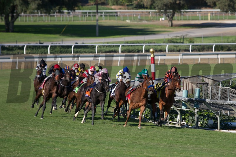 The field rounded the final turn in the Breeders' Cup Turf (G. I). Photo by Crawford Ifland.