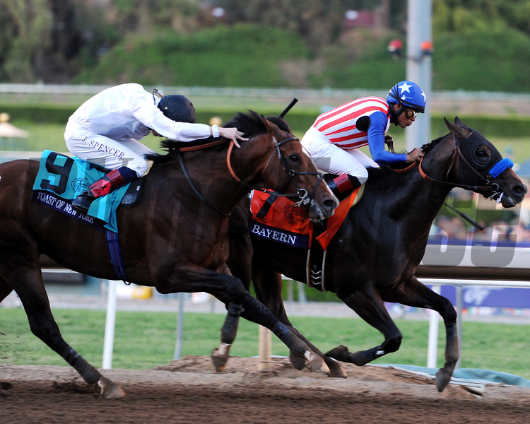 Bayern in the 2014 Breeders' Cup Classic.<br /> Dave Harmon Photo