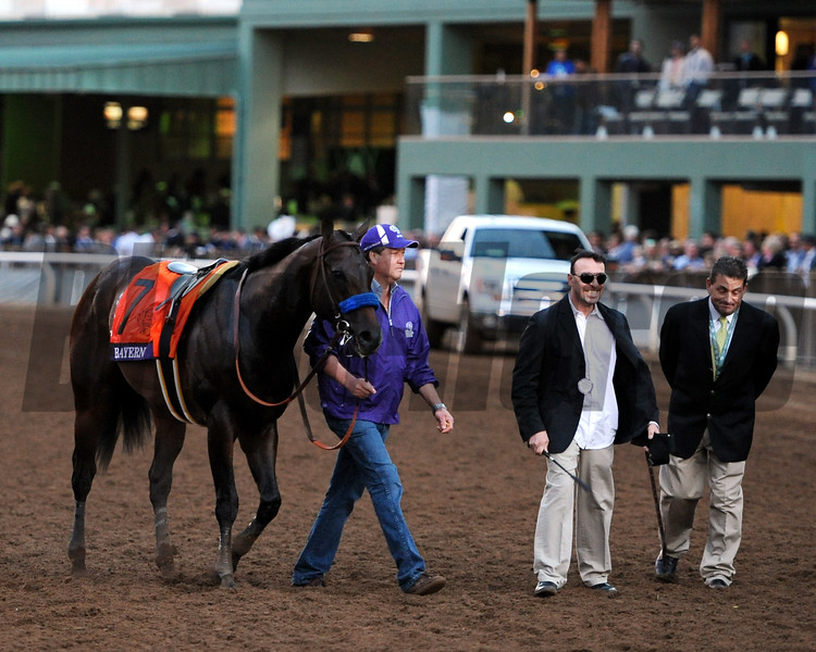 Bayern after the 2014 Breeders' Cup Classic.<br /> Dave Harmon Photo