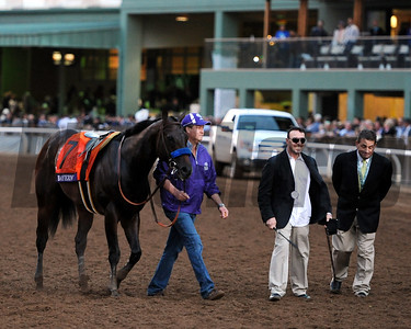 Bayern after the 2014 Breeders' Cup Classic. Dave Harmon Photo