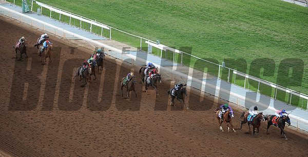 Horses in the 2014 Breeders Cup Classic.  Photo by Wally Skalij