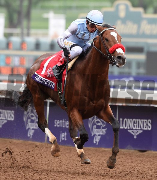Goldencents with jockey Rafael Bejarano wins the Breeders' Cup Dirt Mile Friday afternoon Oct. 31, 2014 at Santa Anita Race Track in Arcadia California.  Photo by Skip Dickstein
