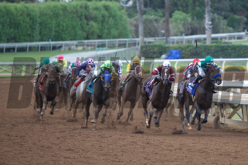 Untapable (maroon silks) and the rest of the field came around the final turn in the Breeders' Cup Distaff (G. I) on October 31, 2014 at Santa Anita.