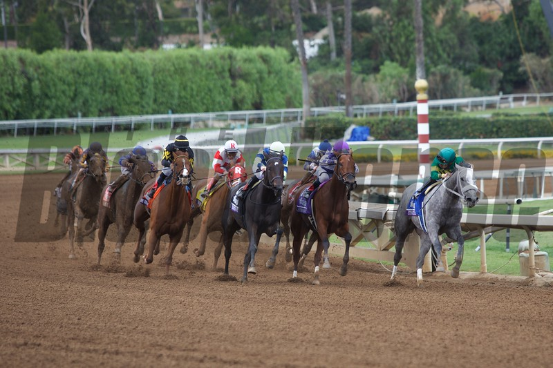 Judy the Beauty (black cap) came from behind around the turn to win the Breeders' Cup Filly & Mare Sprint (G. I) on November 1, 2014 at Santa Anita.
