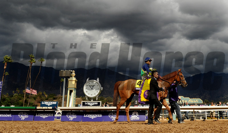 Dayatthespa with jockey Javier Castellano aboard is led to the winners circle after winning the Breeders Cup Filly and Mare Turf at Santa Anita Saturday. Photo by Wally Skalij