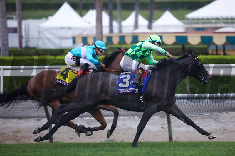 Lady Eli (left, yellow saddle cloth) fights with Sunset Glow in the final stretch of the Breeders' Cup Juvenile Fillies Turf (G. I) at Santa Anita on October 31, 2014.<br /> Crawford Ifland Photo