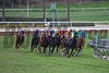 The field rounded the final turn in the Breeders' Cup Juvenile Fillies Turf (G. I) on October 31, 2014.<br /> Crawford Ifland Photo
