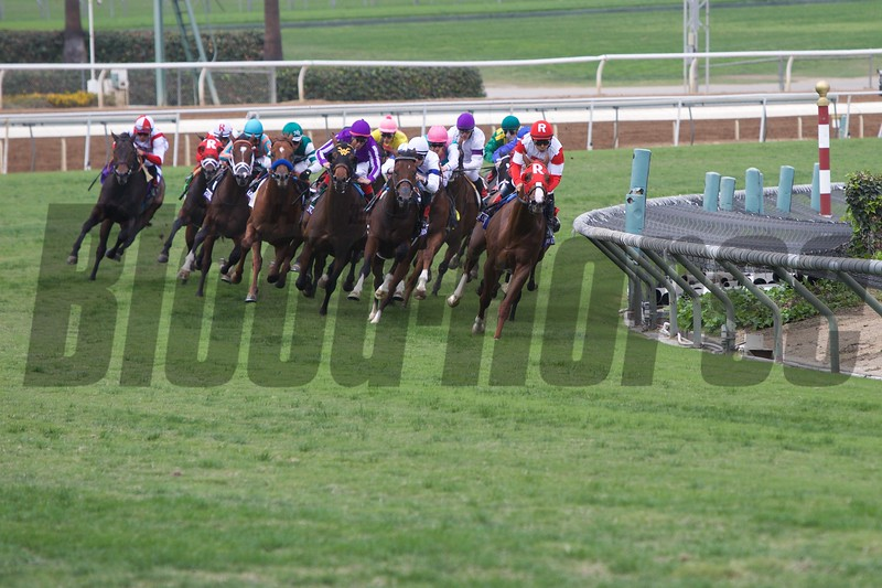 The field rounded the final turn in the Breeders' Cup Juvenile Turf (G. I) on October 31, 2014.