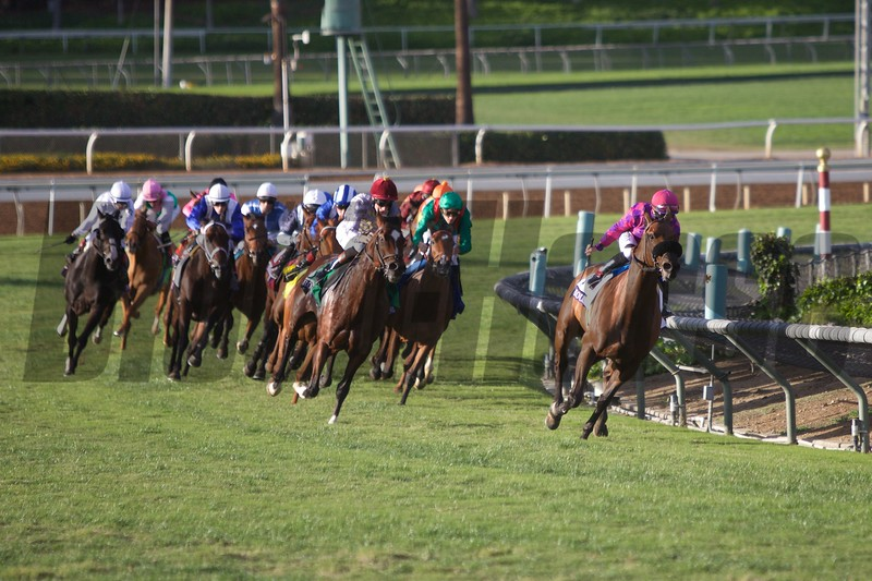 The field rounded the final turn in the Breeders' Cup Mile (G. I) on October 31, 2014.