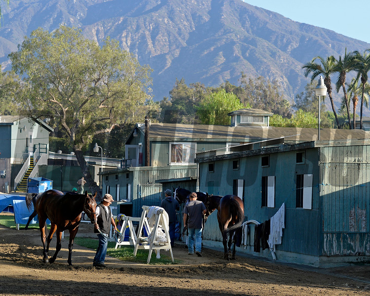 Caption:  barn area scene<br /> Scenes at Santa Anita  on Oct. 27, 2014, in preparation for Breeders' Cup  in California.<br /> 1Origs10_28_14 image478<br /> Photo by Anne M. Eberhardt