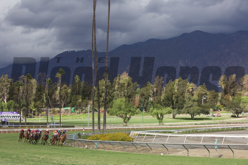 Dayatthespa, Javier Castellano up, led the field around the final turn to win the Breeders' Cup Filly & Mare Turf (G. I) at Santa Anita on November 1, 2014.