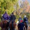 Caption:  backstretch scene<br /> Scenes at Santa Anita  on Oct. 30, 2014, in preparation for Breeders' Cup  in California.<br /> 1Origs10_30_14 image965<br /> Photo by Anne M. Eberhardt