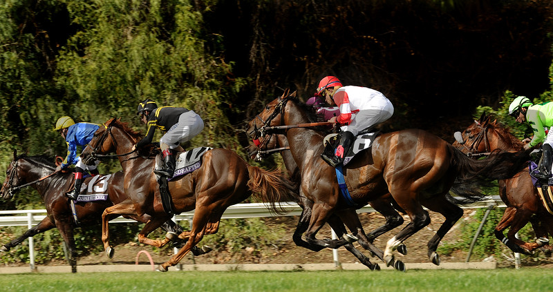 Bobby's Kitten (6), with jockey Joel Rosario aboard, sprints down the hill in the Breeders Cup Turf Sprint at Santa Anita Saturday. Photo by Wally Skalij