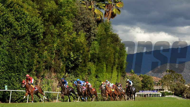 Horses ru down the hill in the Breeders Cup Turf Sprint at Santa Anita Saturday. Photo by Wally Skalij