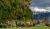 Horses ru down the hill in the Breeders Cup Turf Sprint at Santa Anita Saturday. Photo by Wally Skalij