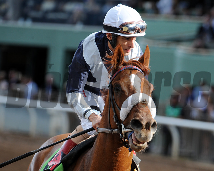 Main Sequence in the Breeders' Cup Turf.<br /> Dave Harmon Photo