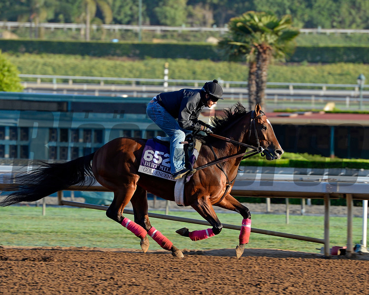 Caption:  Goldencents<br /> Scenes at Santa Anita  on Oct. 27, 2014, in preparation for Breeders' Cup  in California.<br /> 1Origs10_28_14 image398<br /> Photo by Anne M. Eberhardt