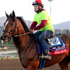 Caption:  Palace<br /> Scenes at Santa Anita  on Oct. 27, 2014, in preparation for Breeders' Cup  in California.<br /> 1Origs10_28_14 image131<br /> Photo by Anne M. Eberhardt