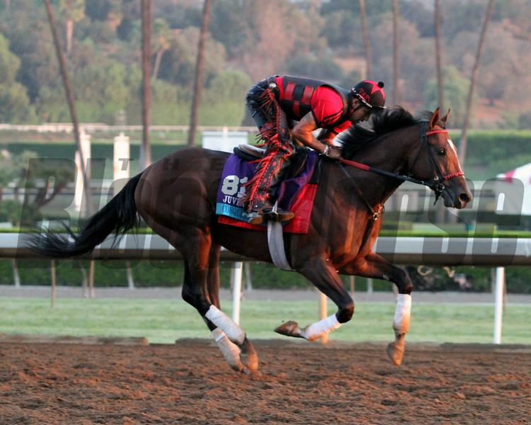 Conquest Typhoon Breeders Cup Santa Anita Park Chad B. Harmon