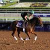 Puca Breeders' Cup Santa Anita Park Chad B. Harmon