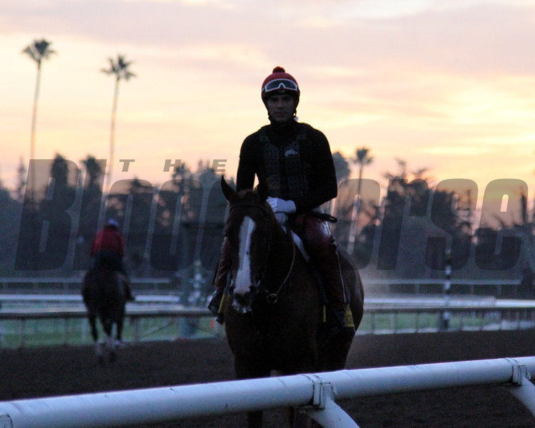 California Chrome Breeders' Cup Santa Anita Park Chad B. Harmon