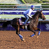 Something Extra Breeders' Cup Santa Anita Park Chad B. Harmon