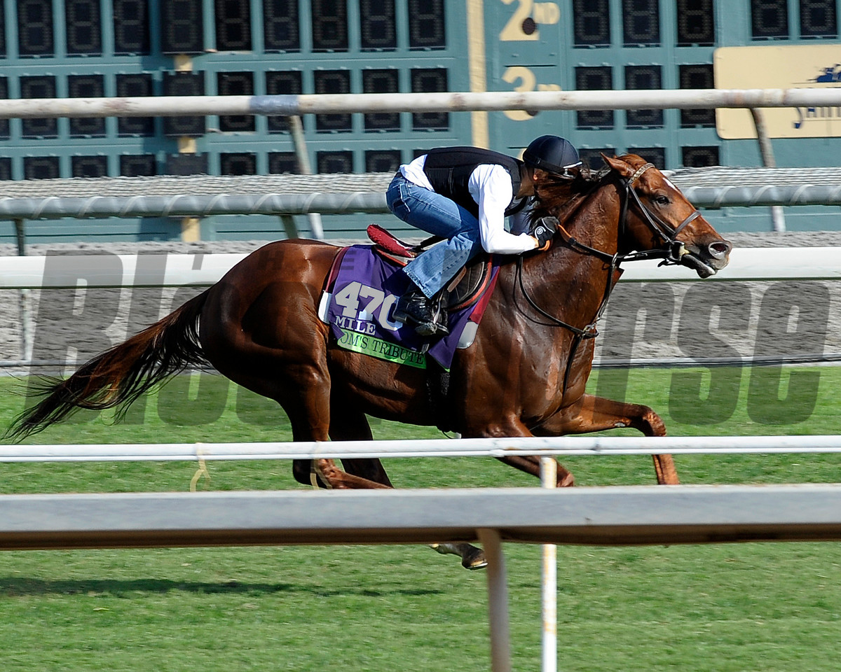 Tom's Tribute with Mike Smith<br /> at Santa Anita in preparation for Breeders' Cup  in California on Oct. 25, 2014.<br /> Photo by Anne M. Eberhardt