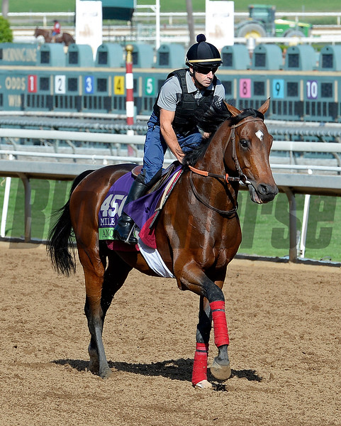 Caption:  Anodin<br /> Scenes at Santa Anita in preparation for Breeders' Cup  in California on Oct. 27, 2014.<br /> 2Origs10_27_14 image014<br /> Photo by Anne M. Eberhardt