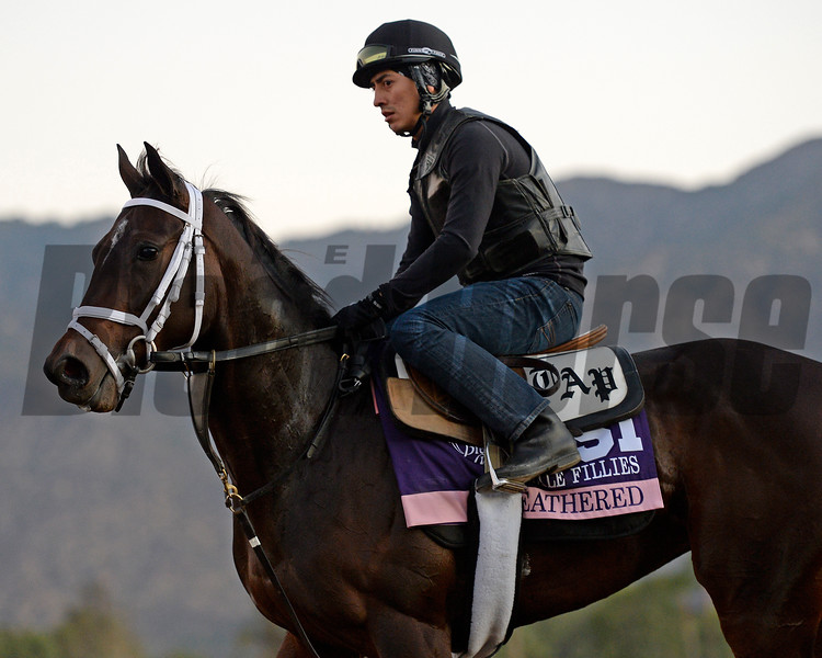 Caption:  Feathered<br /> Scenes at Santa Anita  on Oct. 29, 2014, in preparation for Breeders' Cup  in California.<br /> 1Origs10_29_14 image522<br /> Photo by Anne M. Eberhardt