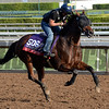 Caption:  Rich Tapestry<br /> Scenes at Santa Anita in preparation for Breeders' Cup  in California on Oct. 27, 2014.<br /> 1Origs10_27_14 image883<br /> Photo by Anne M. Eberhardt