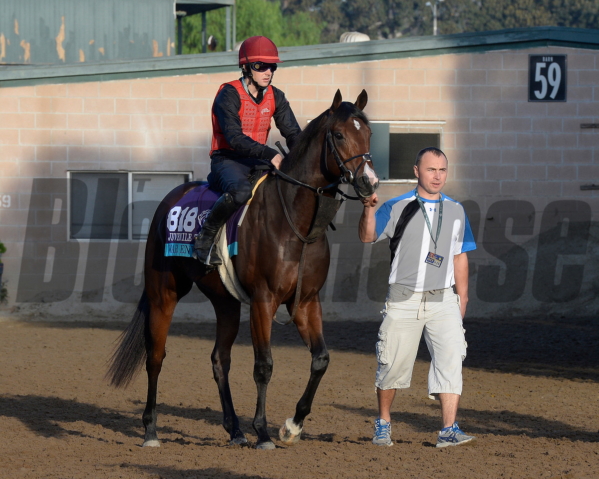 Caption:  War Envoy<br /> Scenes at Santa Anita  on Oct. 30, 2014, in preparation for Breeders' Cup  in California.<br /> 1Origs10_30_14 image973<br /> Photo by Anne M. Eberhardt