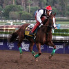 California Chrome Breeders' Cup Santa Anita Park