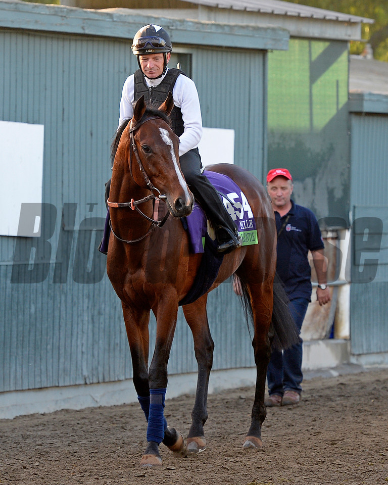Caption:  Karakontie (JPN)<br /> Scenes at Santa Anita  on Oct. 30, 2014, in preparation for Breeders' Cup  in California.<br /> 1Origs10_30_14 image959<br /> Photo by Anne M. Eberhardt