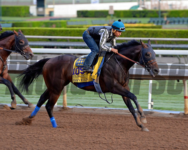 Bayern works for the Breeders' Cup 10/26/2014.  Photo by Anne M. Eberhardt