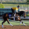Caption:  Artemis Agrotera<br /> Scenes at Santa Anita  on Oct. 27, 2014, in preparation for Breeders' Cup  in California.<br /> 1Origs10_28_14 image395<br /> Photo by Anne M. Eberhardt