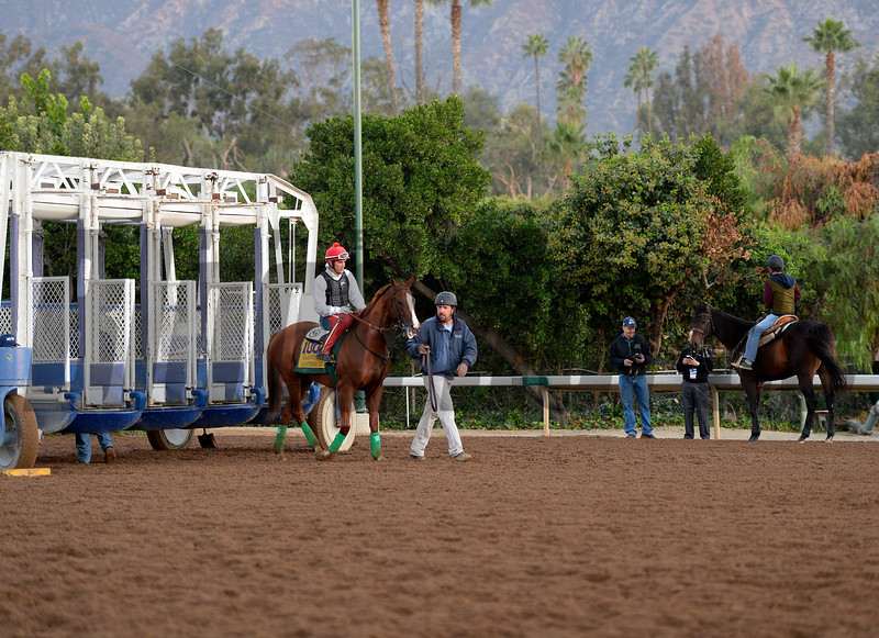 Caption:  California Chrome schools at the gate<br /> Scenes at Santa Anita  on Oct. 29, 2014, in preparation for Breeders' Cup  in California.<br /> 1Origs10_29_14 image551<br /> Photo by Anne M. Eberhardt