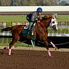 California Chrome with Victor Espinoza works at Los Alamitos Racetrack in California on Oct. 25, 2014. image 5077<br /> Anne M. Eberhardt photo