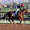 Tom's Tribute Breeders' Cup Mile Santa Anita Park Chad B. Harmon